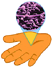 Microbes on a hand